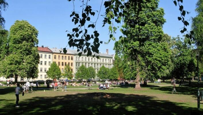 Sofienbergparken på Grunerløkka er en svært populær park. Foto: Wikipedia