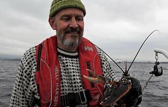 For å øke bestanden av hummer i Indre Oslofjord innføres det nå en fredningssone