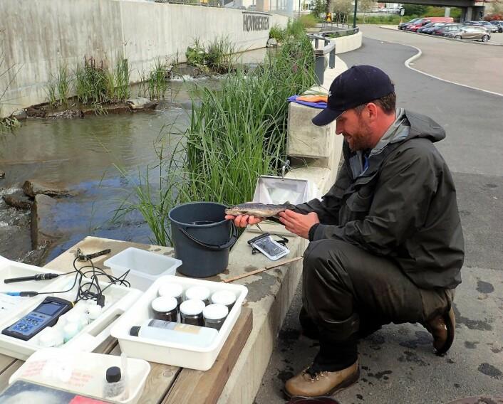 Jens Thaulow i felt ved Hovinbekken. Foto: Therese Fosholt Moe