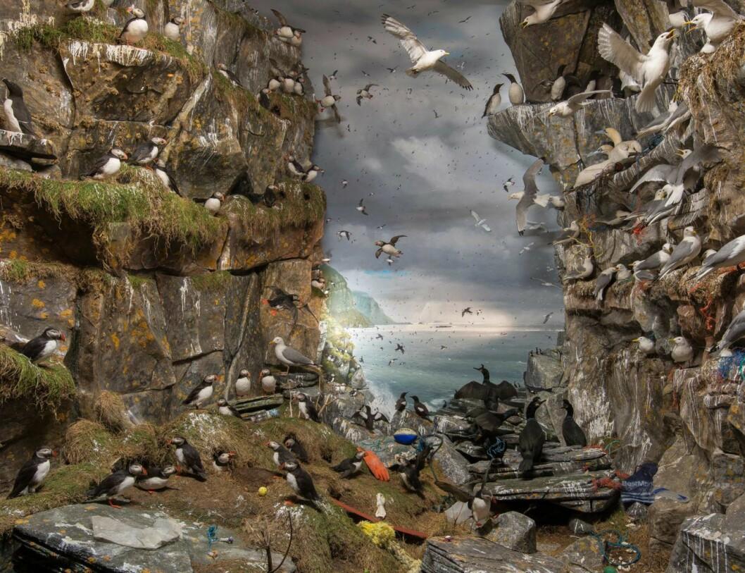 Fuglefjell i Naturhistorisk museum med plastsøppel. Foto: UiO - Naturhistorisk museum