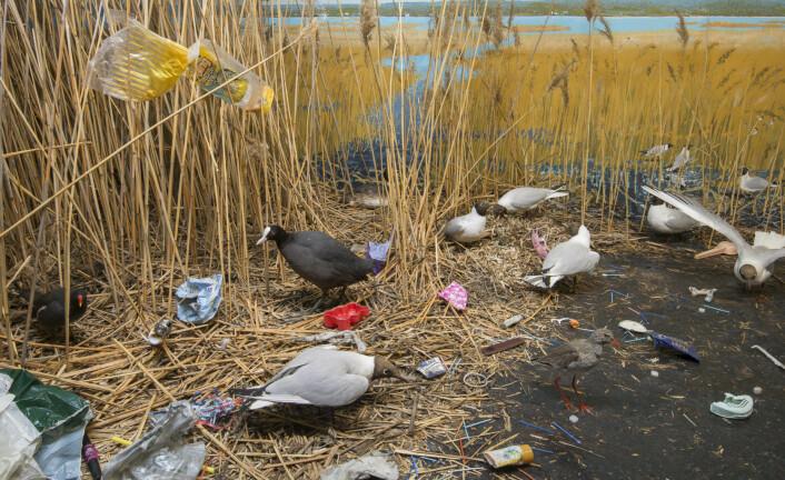 Våtmarksmonter med plastforurensing. Foto: UiO - Naturhistorisk museum
