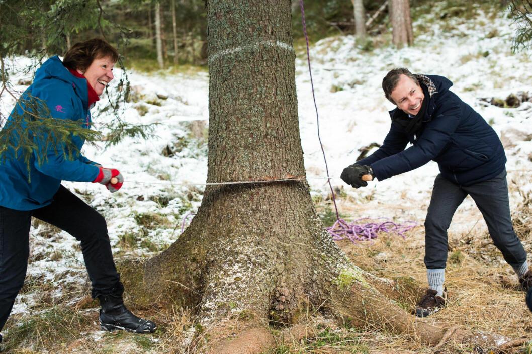 Ordfører i Oslo, Marianne Borgen, og Lord Mayor of Westminster, Councillor Ian Adams, feller årets juletre. Foto: Oslo kommune/Sturlason