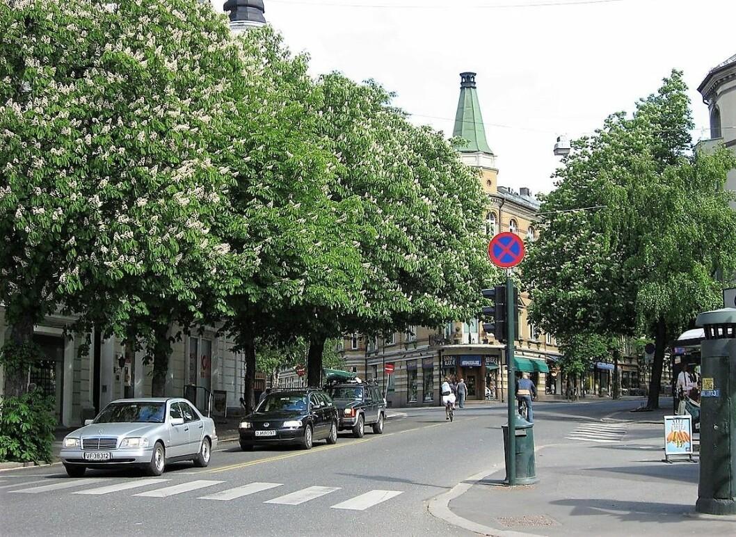 Kastanjetrærne vil ogå i framtiden være et blikkfang langs Bygdøy Allé. Foto: Wikimedia Commons