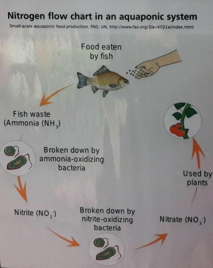 Plakaten illustrerer prinsippet i et aquaponianlegg. Foto: Anders Høilund