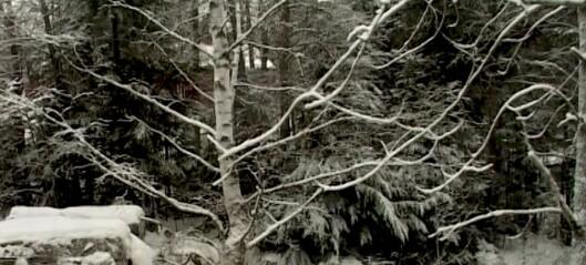 Med hjerte for Oslo, del 2: Vinter i nordmarka, med det mørke diktet Salme som bakteppe