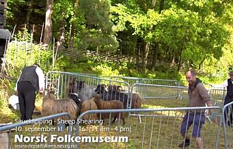 Med hjerte for Oslo: Bææ! På Bygdøy har til og med sauene frisør