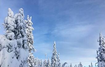 Internasjonale studenter strømmer til skiutleie for å få en ekte, norsk vinteropplevelse