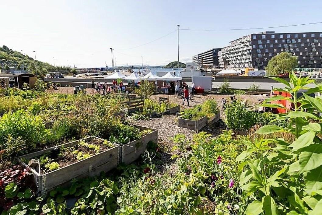 Oslo kommune ønsker å overtra driften av Losætra i Bjørvika fra Bjørvika Utvikling. Foto: Kristian Velkovskij