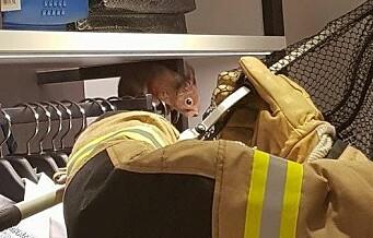 Tøffe brannmenn reddet