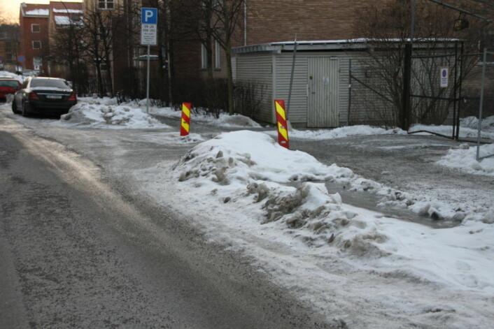 Nedisede veikanter på Ensjø. Foto: Per Øivind Eriksen