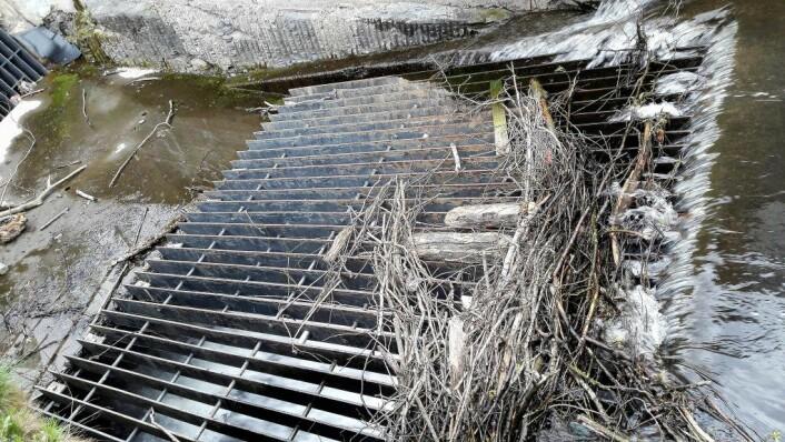 Her forsvinner Alnaelva under jorda i det den går under Enebakkveien. Elva kommer ikke ut igjen før ved Loenga. Foto: Anders Høilund