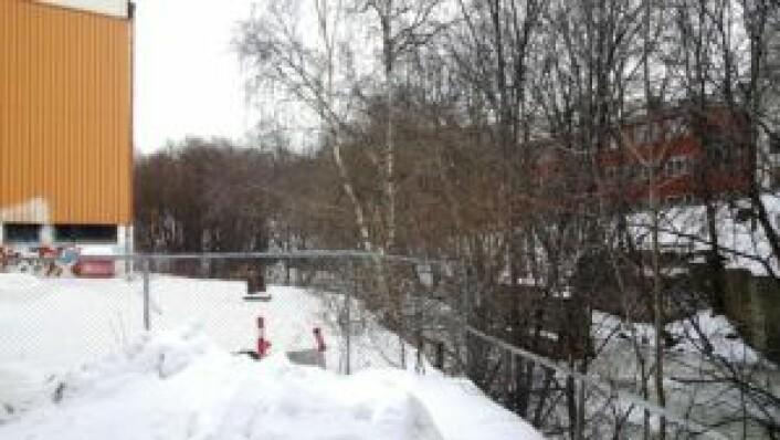 """Rett ved fabrikklokalene renner Akerselva. Her skal det komme et """"midlertidig grøntområde"""" mens man venter på at skolen skal bygges, som nok vil skje om ganske mange år. Kanskje turveien fortsetter langs elva, heller enn dagens omvei rundt fabrikken? Foto: Tarjei Kidd Olsen"""