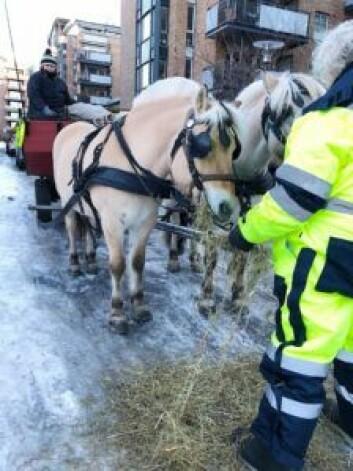 Hestene lader batteriene på Lilleborg torg før avgang. Foto: Lilleborg torg