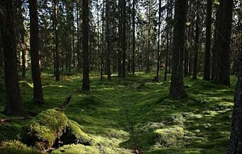 – Industriskogen i Oslomarka må stanses