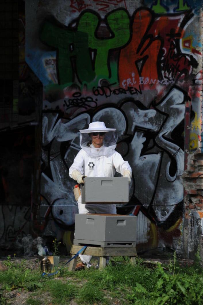 Birøkting er blitt en urban hobby. Her en birøkter fra ByBi. Foto: ByBi