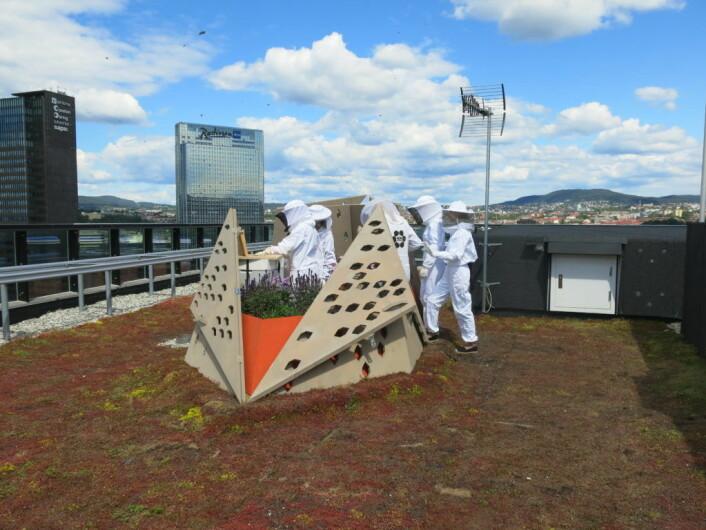 Nei, det er ikke en UFO som har landet på et tak i Bjørvika. Det er birøktere fra Biby som steller med sine kjære bier. Foto: ByBi, Roar Ree Kirkegård