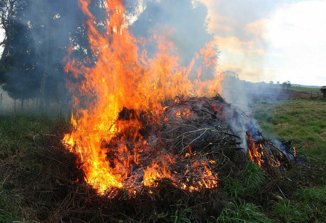 Brenning av hageavfall er strengt forbudt i Oslo. Foto: Flickr
