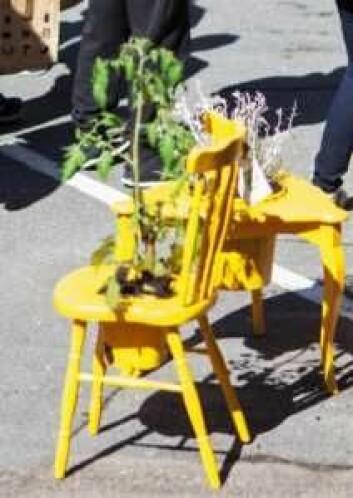 Dyrk nabolaget! er en byfestivalg for bynønder og grønne amatører. Foto: Hilde Kvivik Kavli