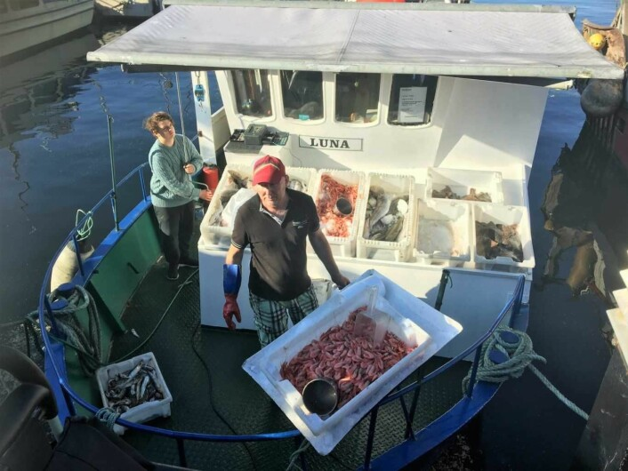 Ved pir 4 på Rådhusbrygga ligger fiskebåtene som selger fersk fisk. Foto: Amalie Amalie Aune Bjerkem