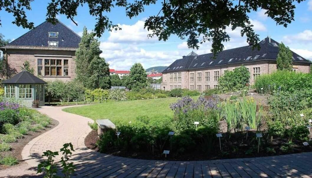 Botanisk hage er en del av Universitetet i Oslo, som er stengt på grunn av koronaviruset.