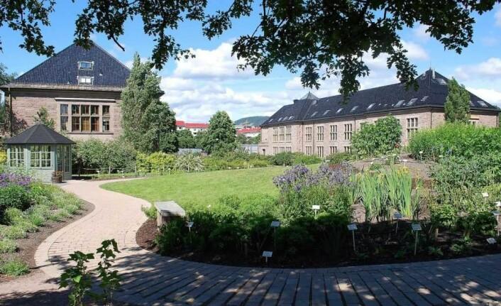 Universitetet i Oslo frykter bygging av en midlertidig flerbrukshall på Sirkustomta på Tøyen vil kunne hindre framtidig utvikling av Botanisk Hage. Foto: Helge Høifødt / Wikimedia Commons