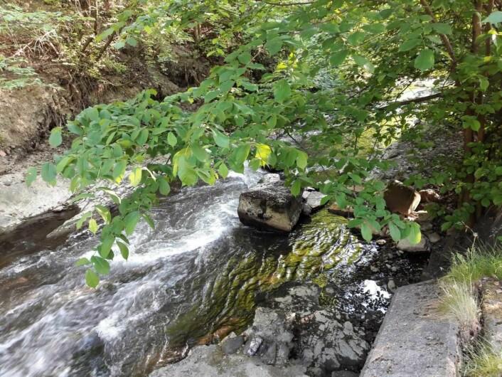Alnaelva renner friskt og idyllisk forbi Brynseng. Men ingen vet hva som førte til at fire veltrente idrettsgutter fikk alvorlig, akutt forgiftning etter å ha drukket små mengder vann fra elva. Foto: Anders Høilund