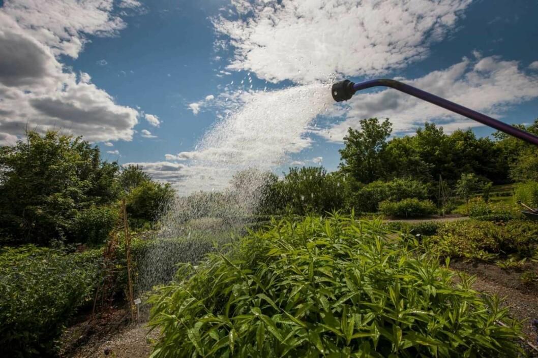 Folk bør oppgradere vannblander og kran for å senke vannforbruket, mener skribenten. Foto: Åge Hojem, NTNU Vitenskapsmuseet