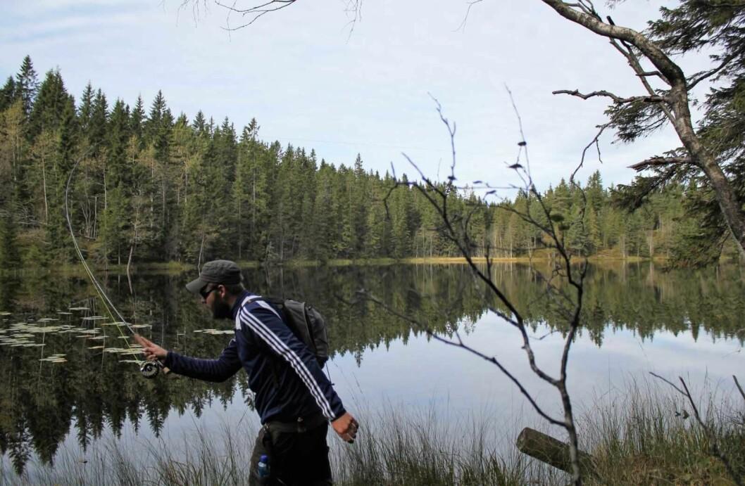 Å hekte flua i et tre er hverdagen for fluefiskere. Spesielt de ferske i faget trenger litt ekstra armslag. Foto: Anders Sveen