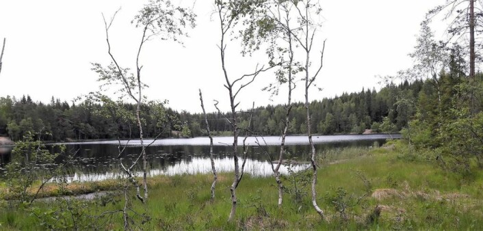 Det grunne Skredderudtjernet er fint for både de som vil fiske, de som vil bade, og de som vil begge deler. Foto: Anders Høilund