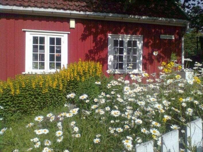 I Hønse-Lovisas hus kan du få deg en kopp kaffe og vafler. Men du nyter blomstene og livet langs Akerselva. Foto: Wikimedia