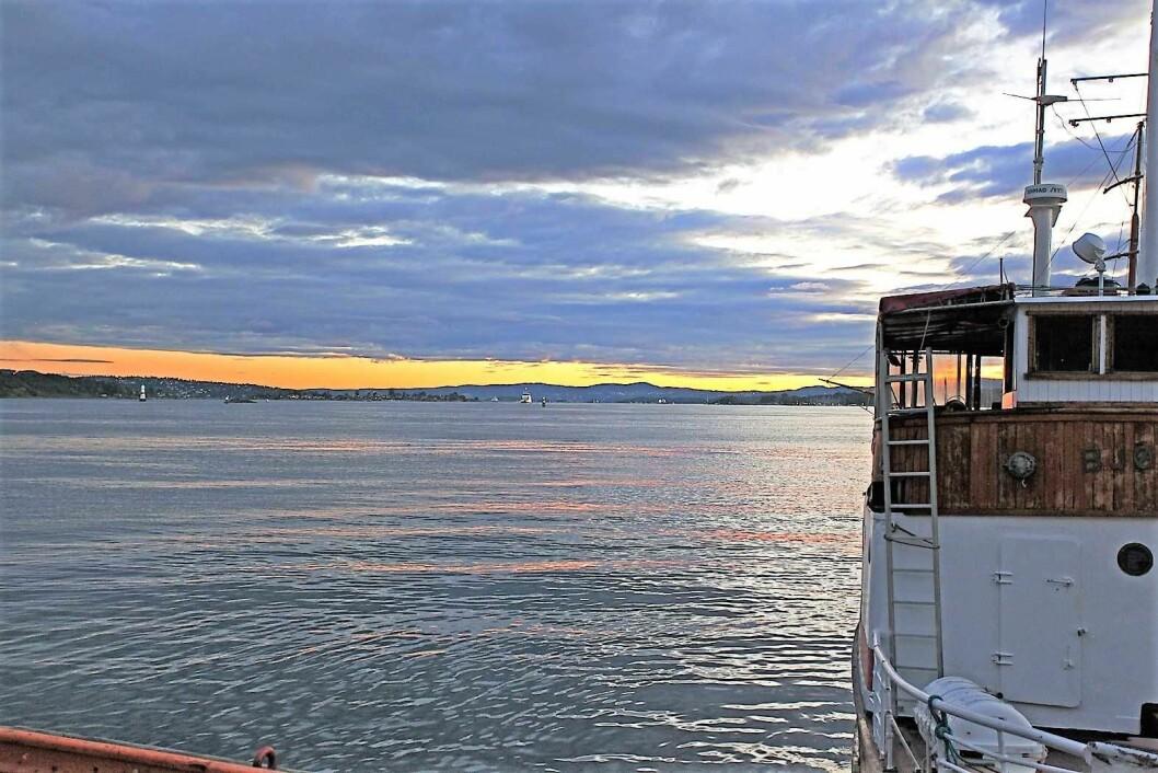 Aller verst ser det ut for trosken i indre Oslofjord. Halvparten av all torsk som dør i fjorden blir fisket opp. Foto: Leif Skandsen/Flickr