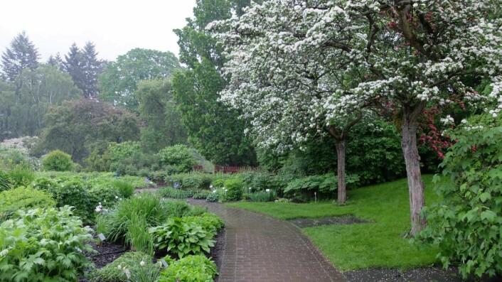 Et besøk ved Naturhistorisk museum kan kombineres med en spasertur i Botanisk hage. Foto: Ragna Bruland