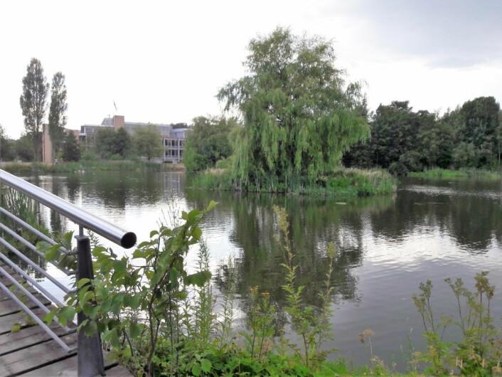 Smedstaddammen var generøs, og alle fiskerne som var med Urban Anglers på tur fikk fisk. Foto: Anders Høilund