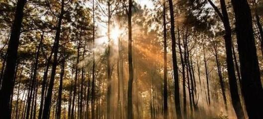 Tross styrtregn advares det mot lynnedslag og ekstrem skogbrannfare i Oslomarka