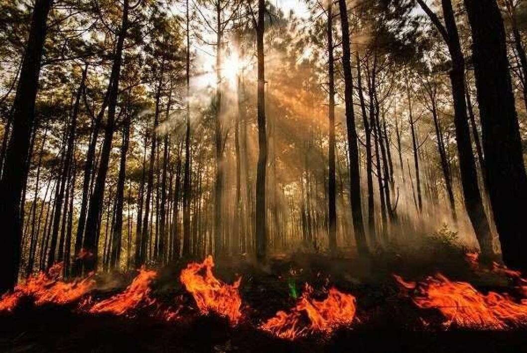 Oslomarka har vært skånet fra større skogbranner. Men frykten gjør at beredskapen er på topp når det både er tørt, men samtidig meldt styrtregn med fare for lynnedslag. Foto: Direktoratet for sivil beredskap