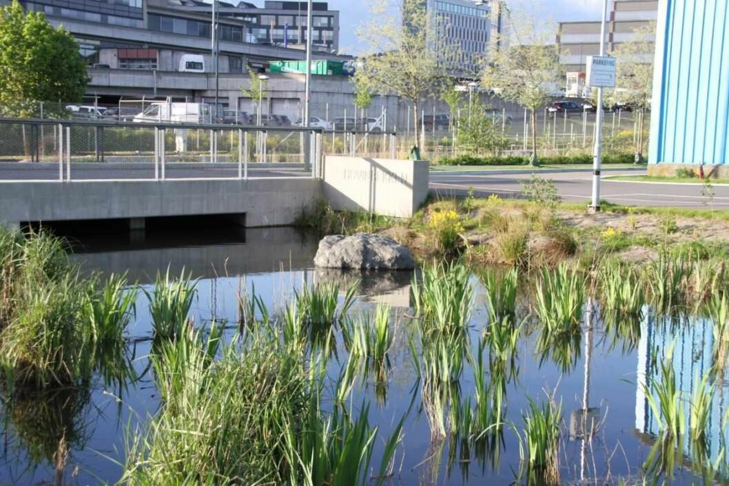 Her forsvinner Hovinbekken inn ved Ensjø. Men lenger nord vil den rekonstrueres i et nytt løp og danne grunnlag for et flott grøntområde i den nye Ensjøbyen. Foto: Per Øystein Eriksen/www.ensjo.org