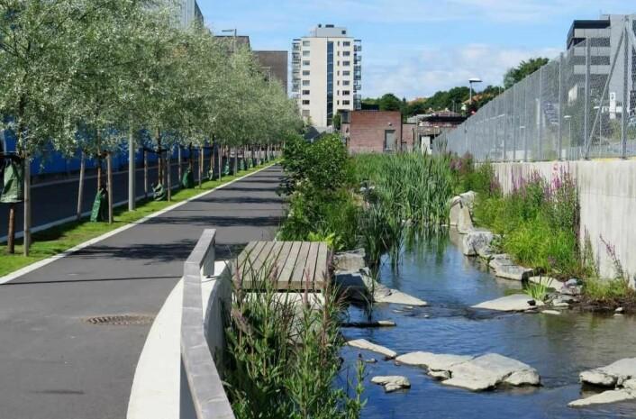 Hovinbekken er nylig åpnet fra Teglverksdammen til Risløkka. Rehabilitering av vassdraget er en del av planene for utviklingen av Hovinbyen. Foto: Plan- og bygningsetaten