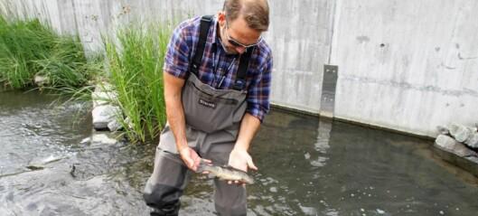 – Sannsynligvis var det gift som drepte fisken i Hovinbekken for en drøy uke siden