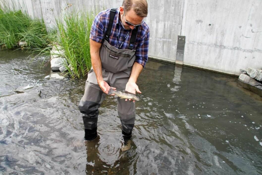 Terje Laskemoen, fra bymiljøetaten, kan konstatere at Hovinbekken er full av død fisk. Foto: Per Øivind Eriksen / Ensjø Aktuell informasjon
