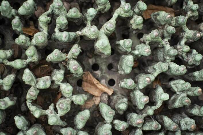 I dette hullet skulle det stått en gruppe av små figurer. Foto: Morten Lauveng Jørgensen