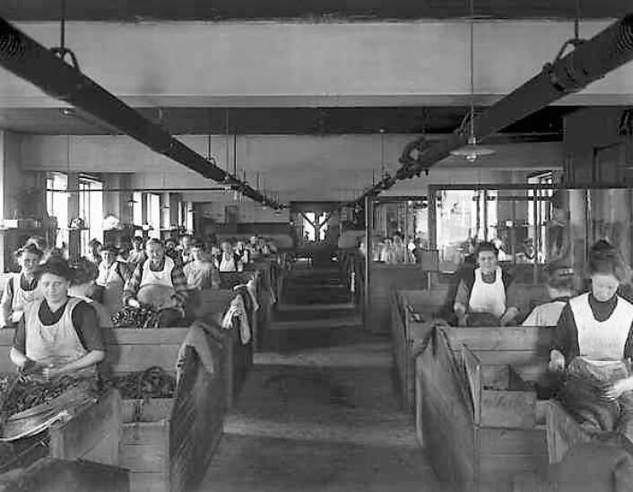 Conrad Langaards Tobaksfabrikk i 1910. Foto: Anders Beer Wilse/Oslo Museum