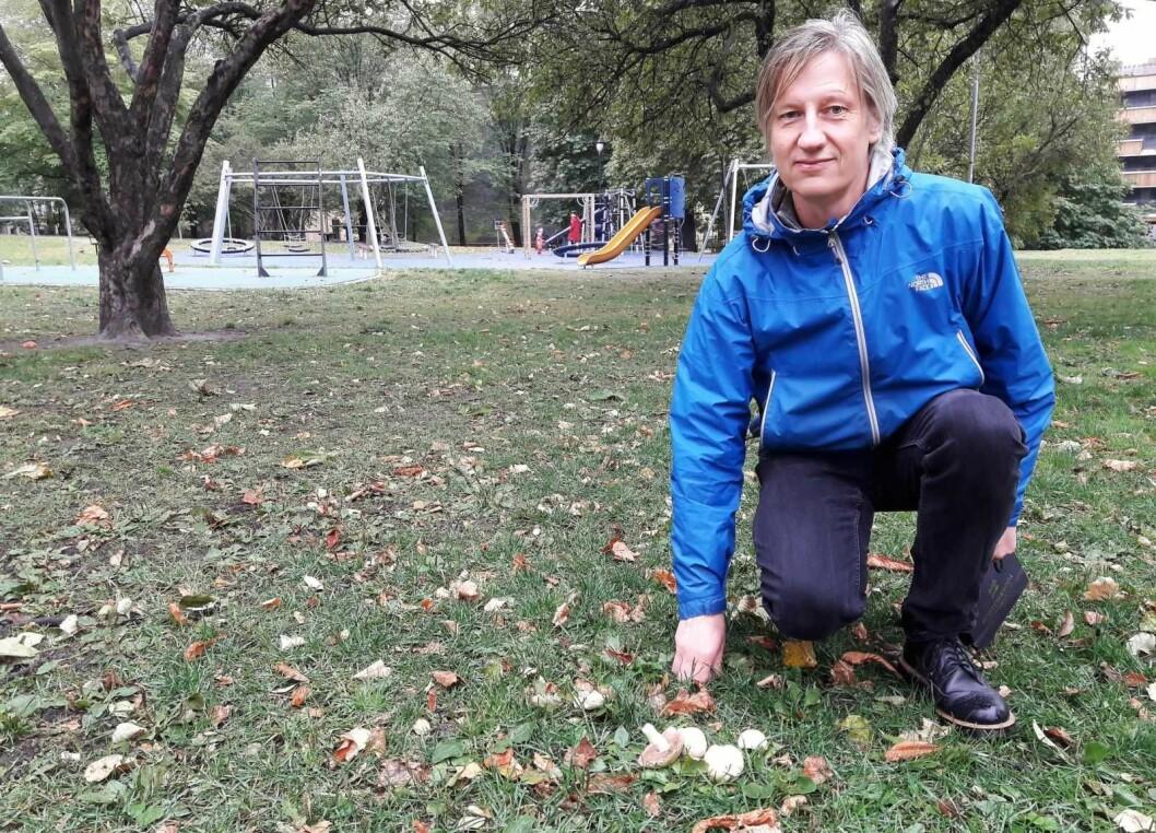 I parken, i byen. Roger Andersen har funnet sjampignon. Foto: Anders Høilund
