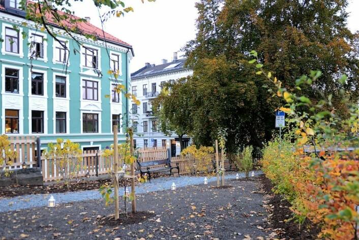 Slik har Cecilie Wille tegnet ut den nye parken. Til våren kommer det grønt løv på trærne og tulipaner opp av jorda. Foto: Morten Lauveng Jørgensen
