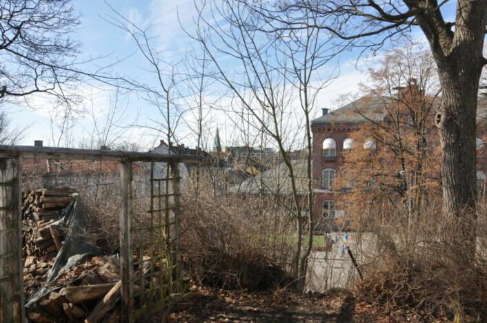 Bak trærne skimtes Bolteløkka skole og skolegården. Denne tomta krever nå utbygger 100 millioner kroner for. Det er verdien Eiendomsmegler1 mener eiendommen ville hatt hvis den var ferdig utbygget Foto: Arnsten Linstad