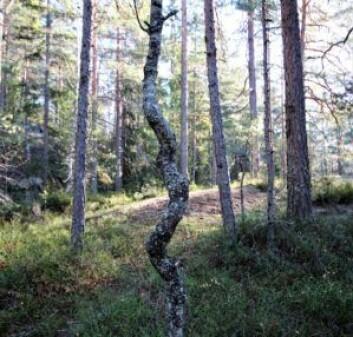 Twist´n shout treet. Foto: André Kjernsli