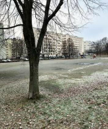 Her, på grusbanen på Marienlyst, kan siloene stå, mener naboene til parken Lille-Jacob. Foto: Privat