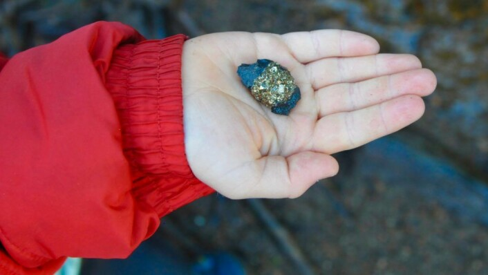 «Pyritt har lurt mang en gullgraver,» smilte Reidar. Hardheten av dette mineralet er så høy at det ikke lar seg risse med kniv. Foto: Sara Linea Pihl / Katja Johanne Pihl