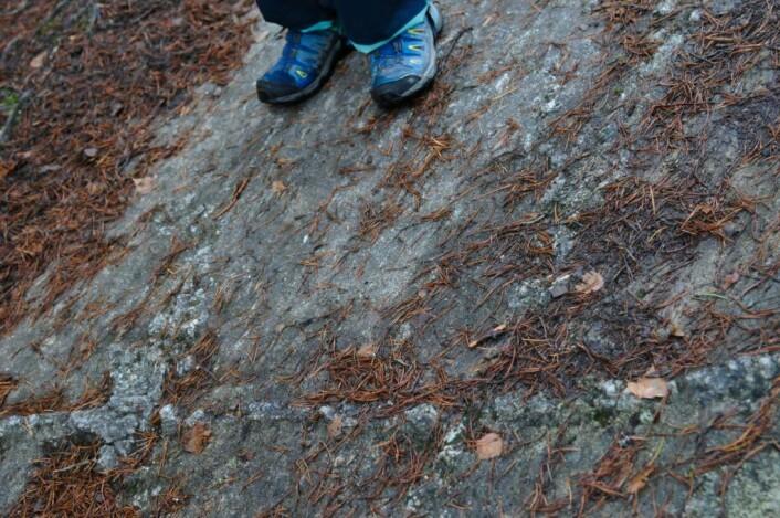 Her er det små sprekker i fjellet, som har blitt fylt igjen med andre mineraler. Dette fjellet har opplevd minst 40 istider i de siste 2,6 millioner år og like mange mellomistider. For bare 20 000 år siden, kun et øyeblikk i geologien, lå det under en 2000 meter tykk isbre. Foto: Sara Linea Pihl / Katja Johanne Pihl