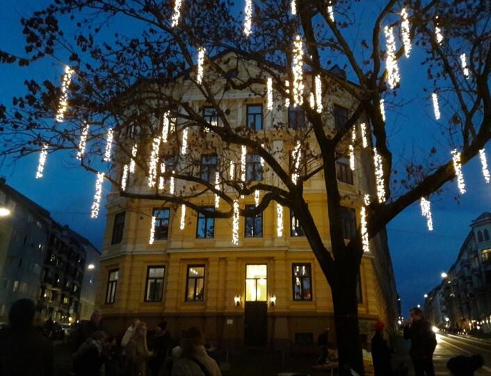 I det store asketreet på Margrethe Munthes plass er har det blitt hengt opp lys. Foto: Anders Høilund