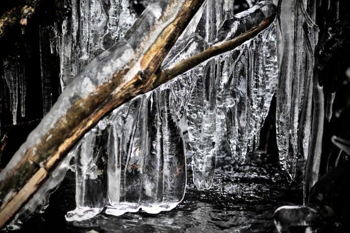 Naturens eget kunstverk i Østmarka. Foto: Katja Johanne Pihl